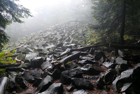 Góry Świętokrzyskie: ze Świętej Katarzyny na Łysicę