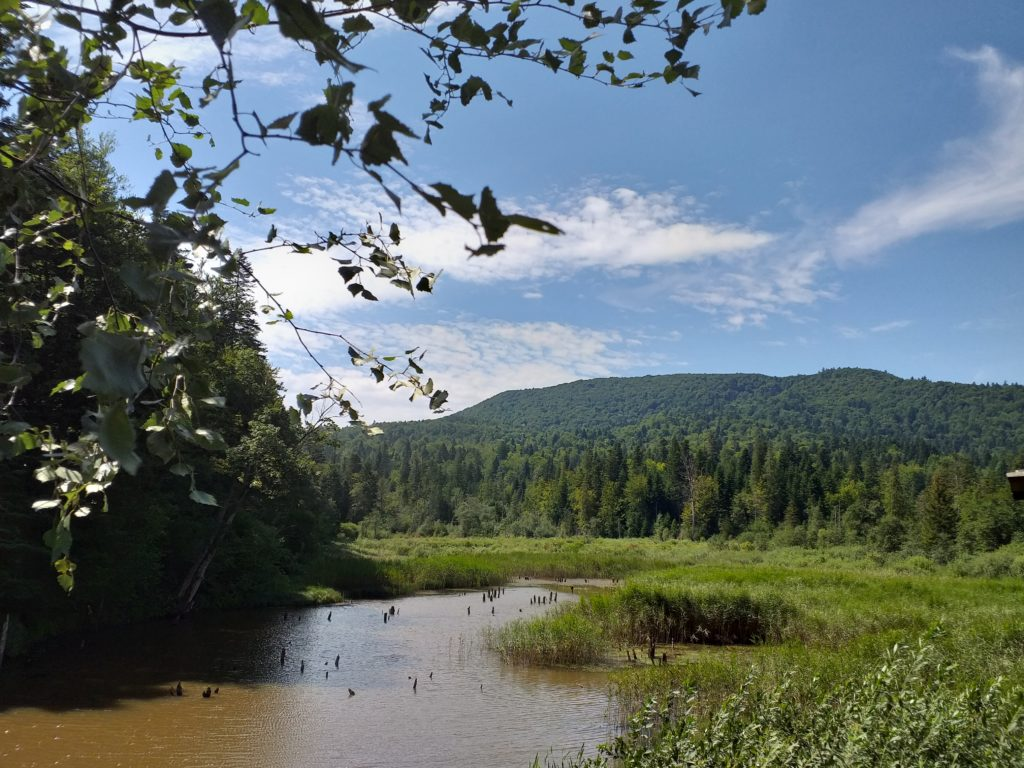 Dzikie Bieszczady: Huczwice, Rabe, Chryszczata