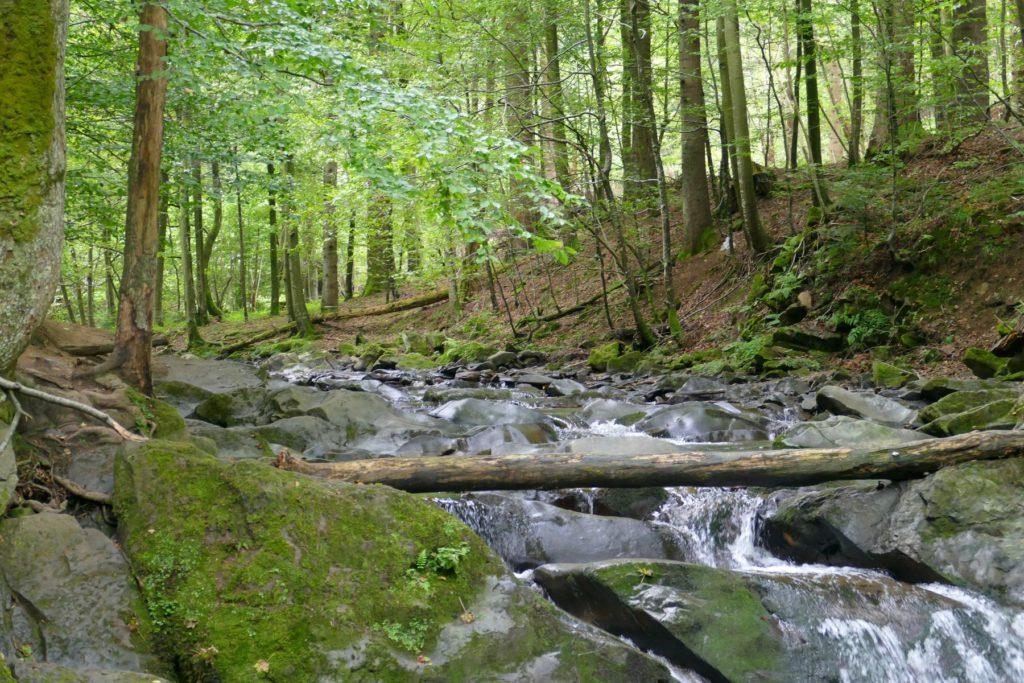 Dzikie Bieszczady: dolina Sanu – Zatwarnica, Dwernik Kamień i Hulskie